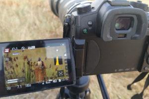 filmando aves en extremadura