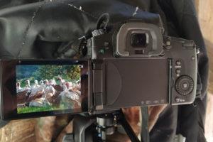 Filmando aves en Monfragüe